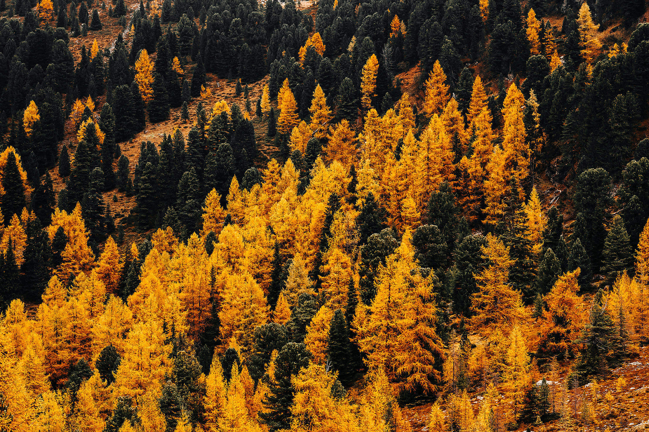 Colorful Trees in Autumn Free Stock Photo
