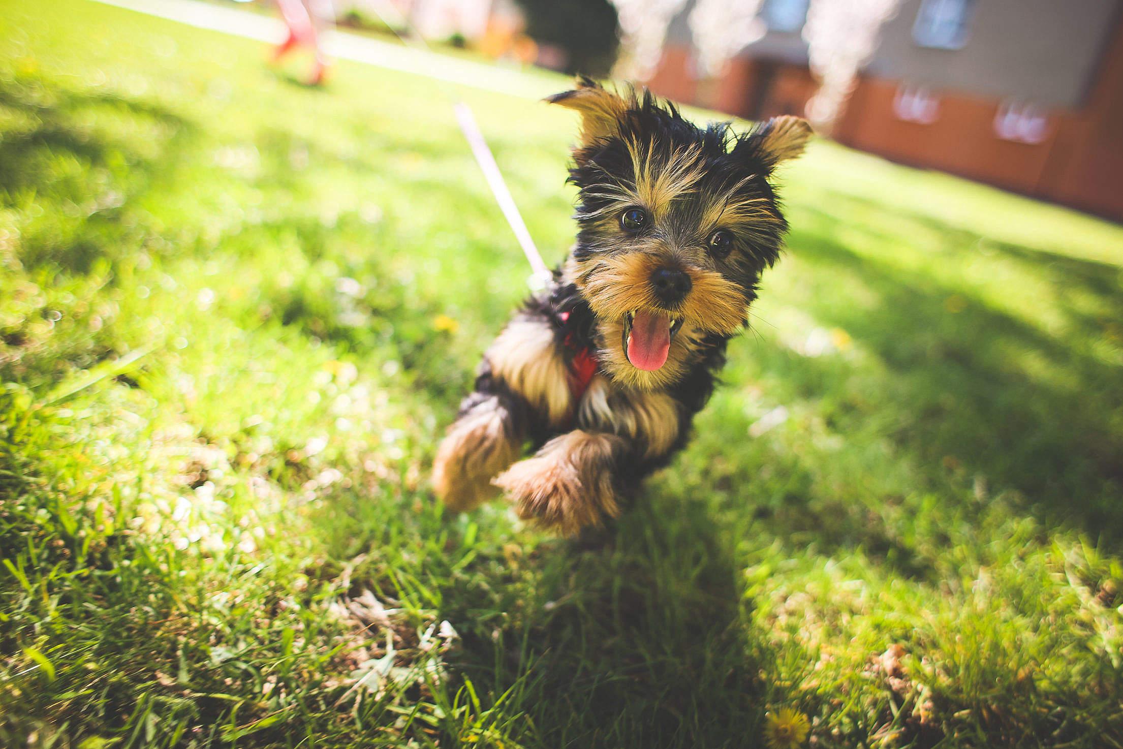 Crazy Jessie Free Stock Photo