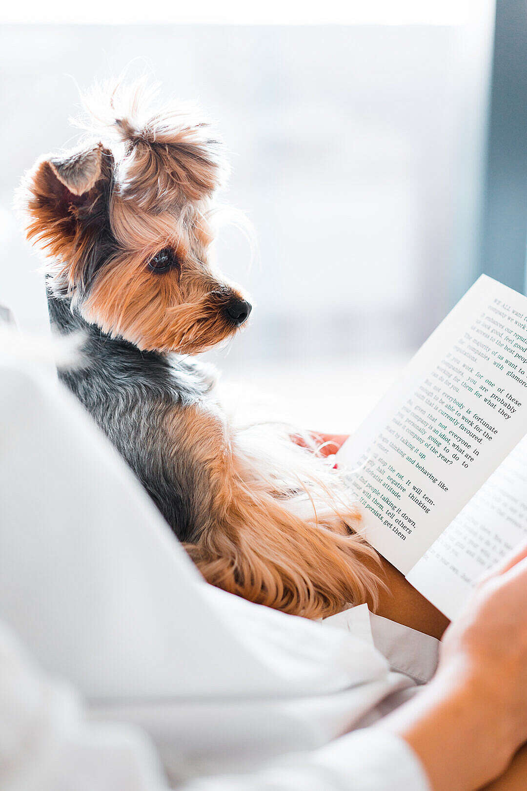 Download Cute Dog Reading a Book FREE Stock Photo
