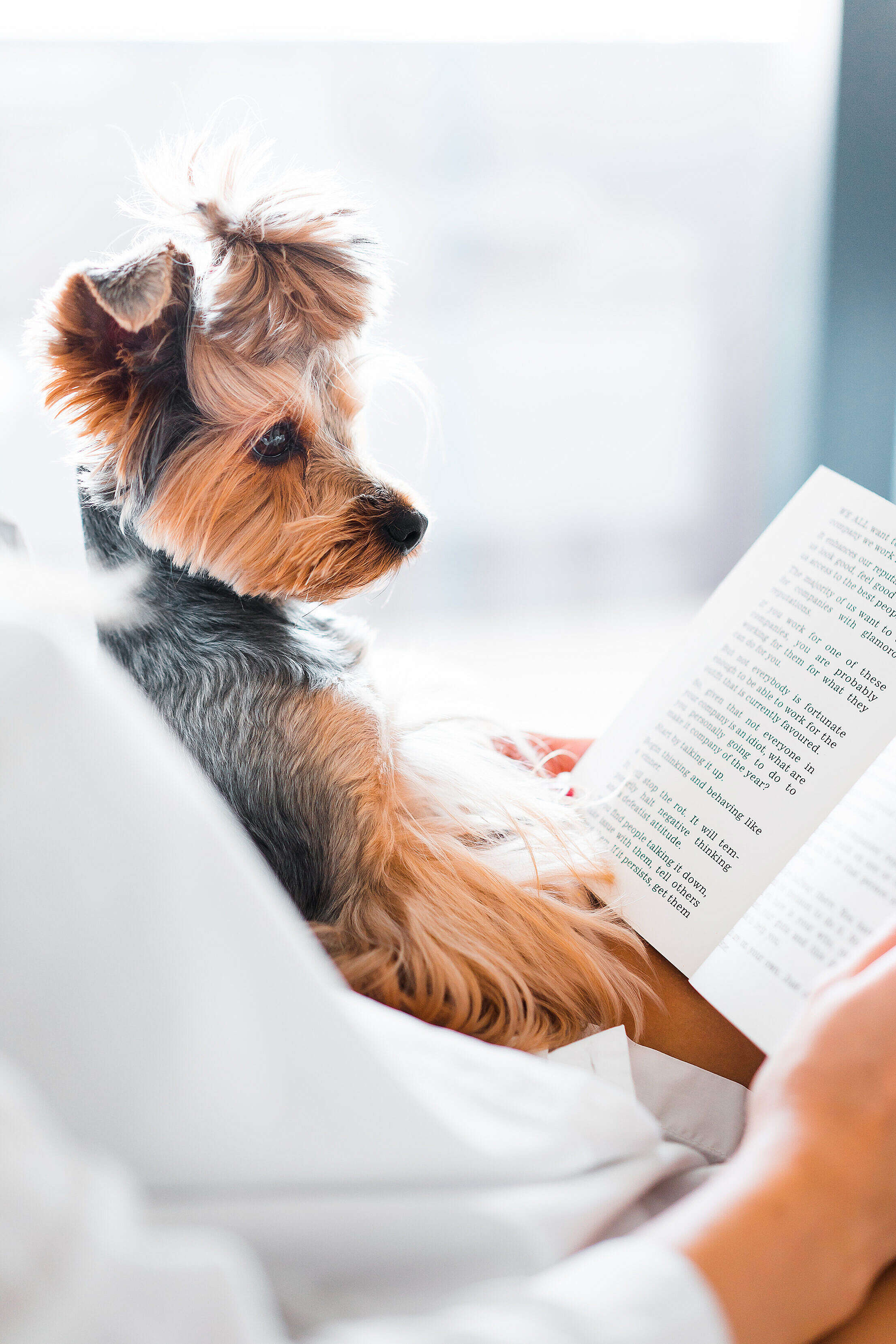 Cute Dog Reading a Book Free Stock Photo