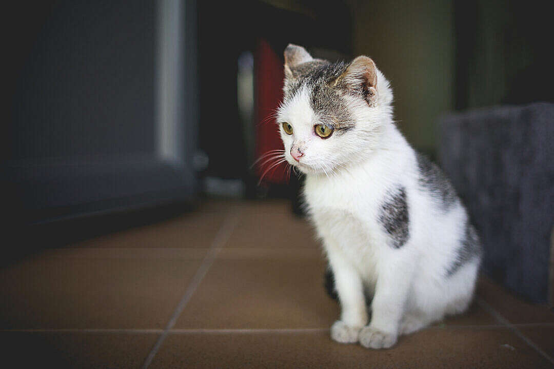 Download Cute Little Cat at Home FREE Stock Photo