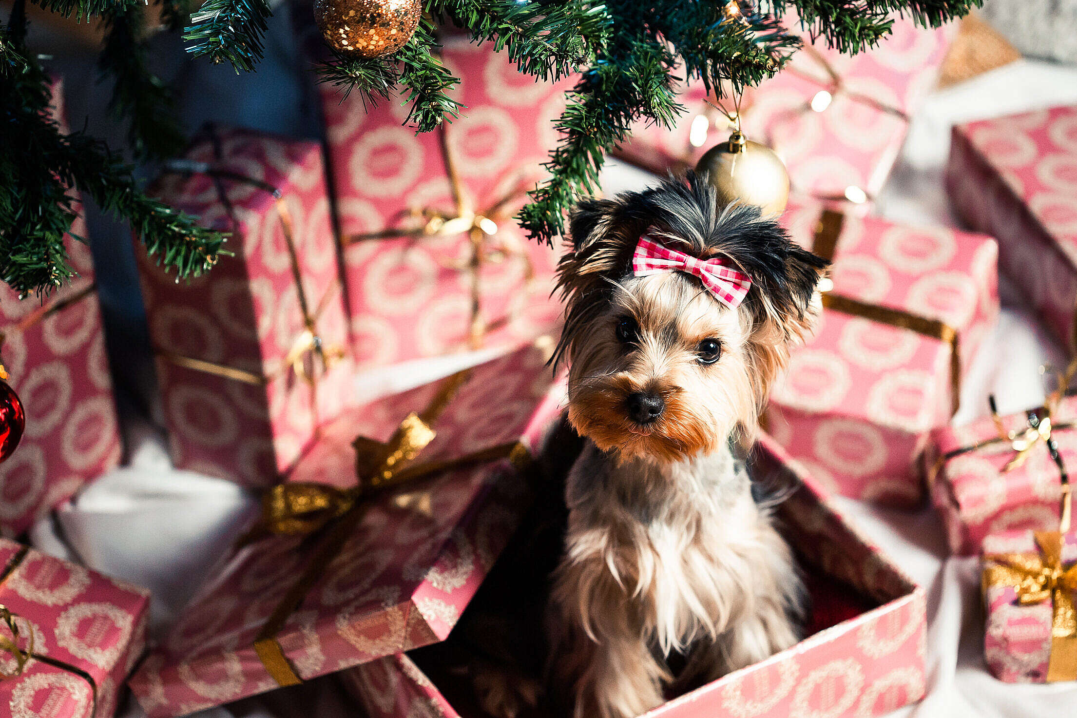 Cute Puppy as a Christmas Present Surprise Free Stock Photo