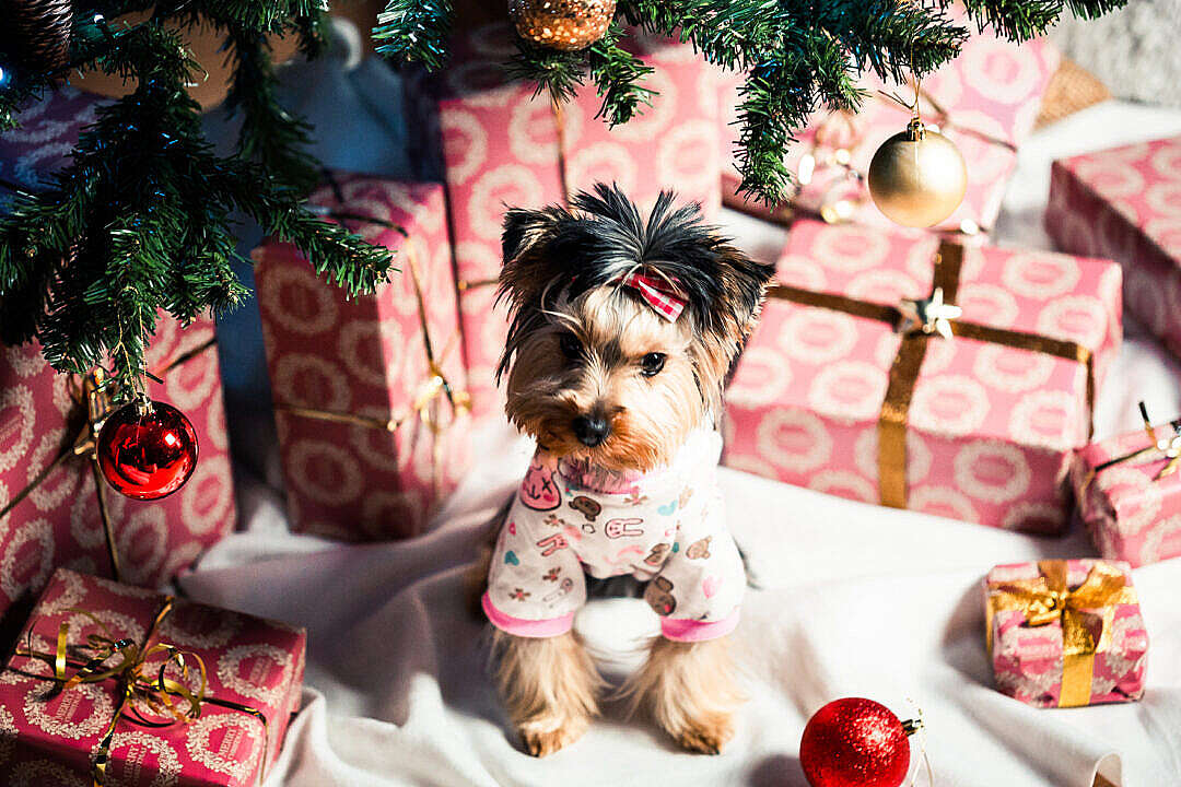 Download Cute Puppy in Pyjamas Under Christmas Tree FREE Stock Photo