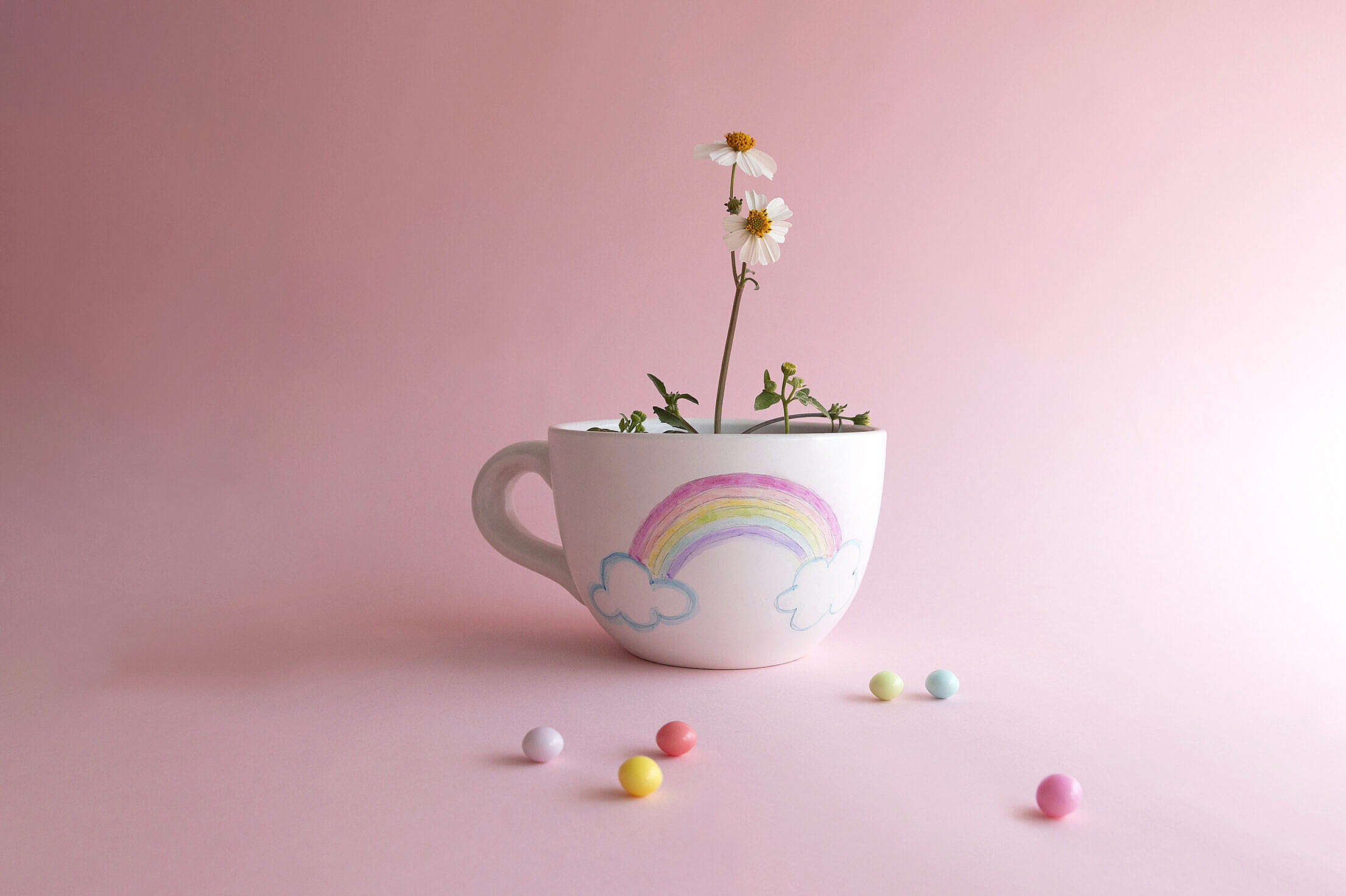 Cute Rainbow Cup with Flower Inside Free Stock Photo