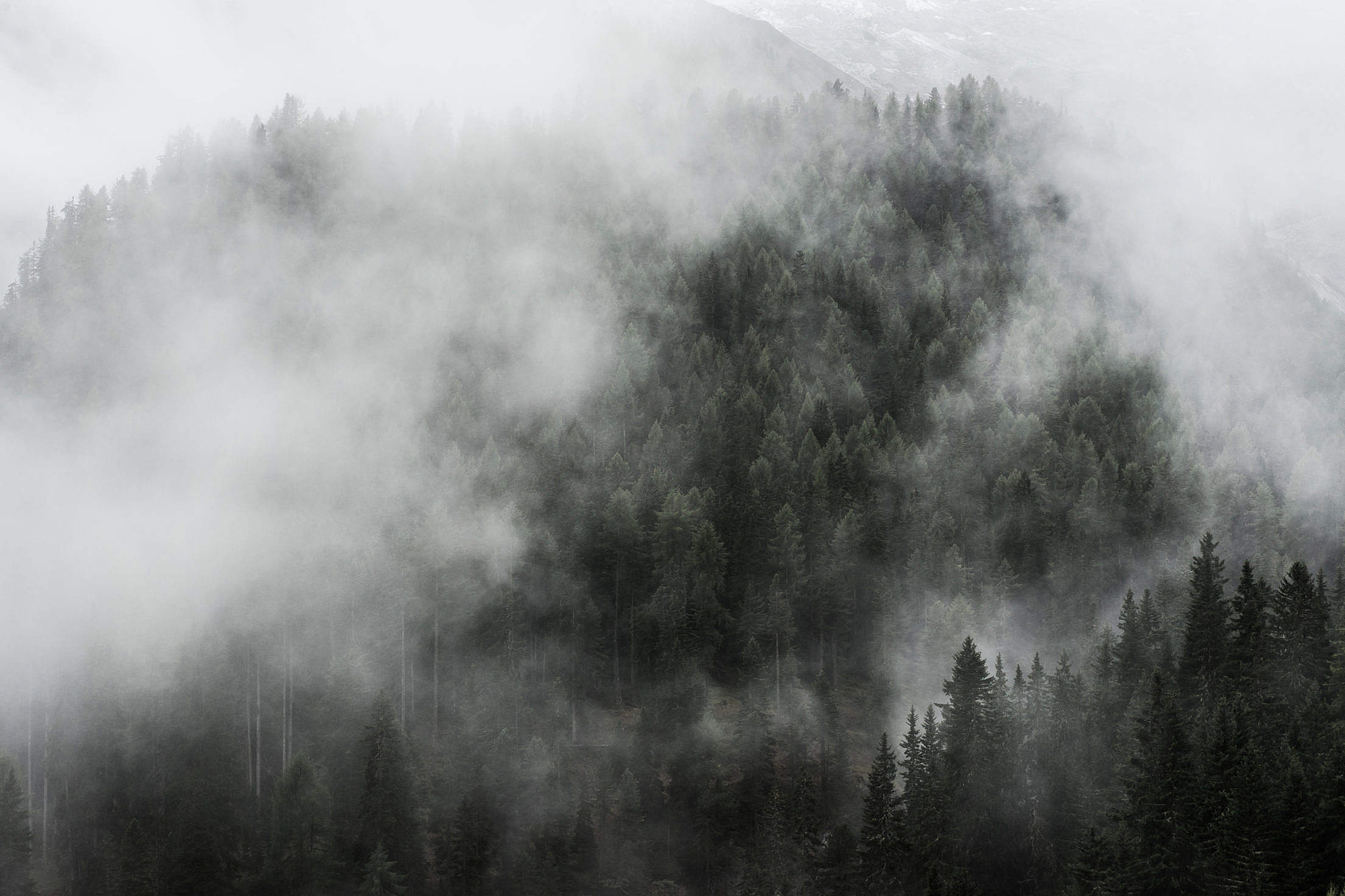 Dark Fog over Woods Free Stock Photo