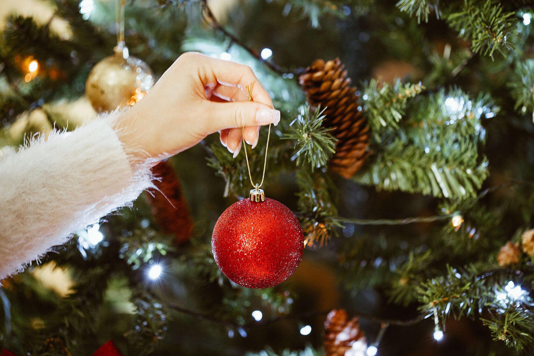 Decorating Christmas Tree Free Stock Photo