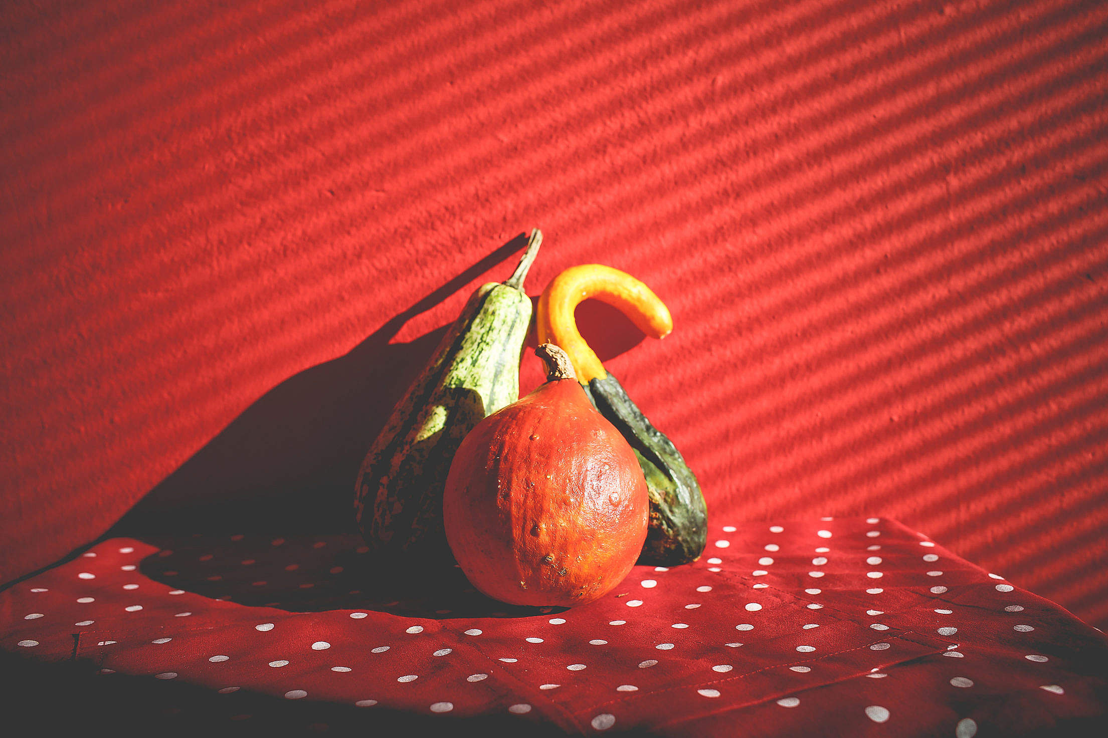 Decorative Pumpkins in Red Free Stock Photo