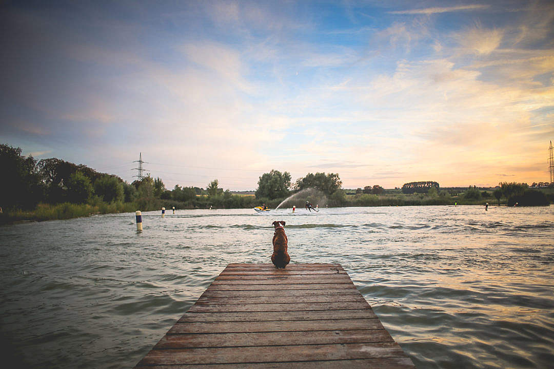 Download Dog Sitting on a Pier FREE Stock Photo