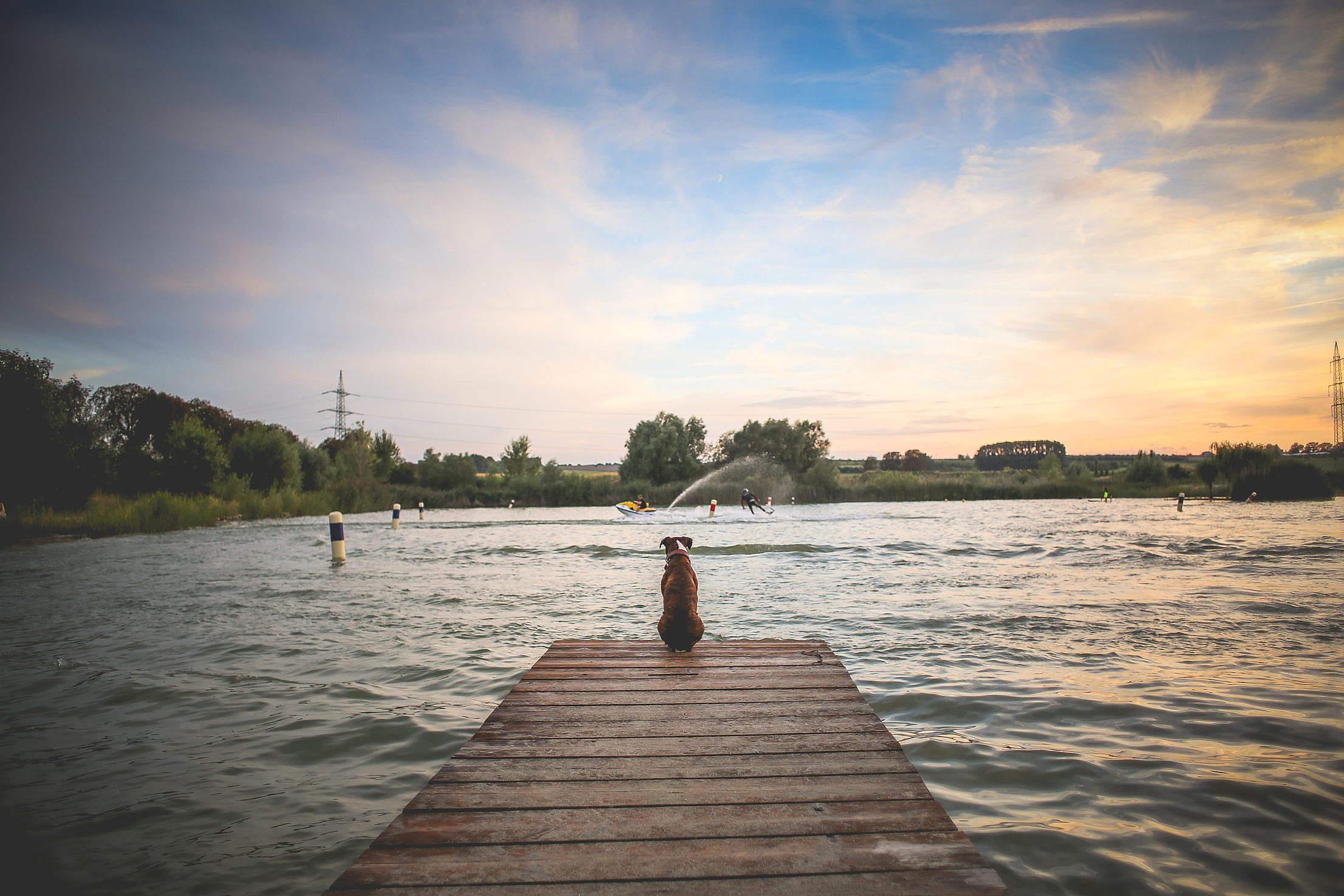 Dog Sitting on a Pier Free Stock Photo