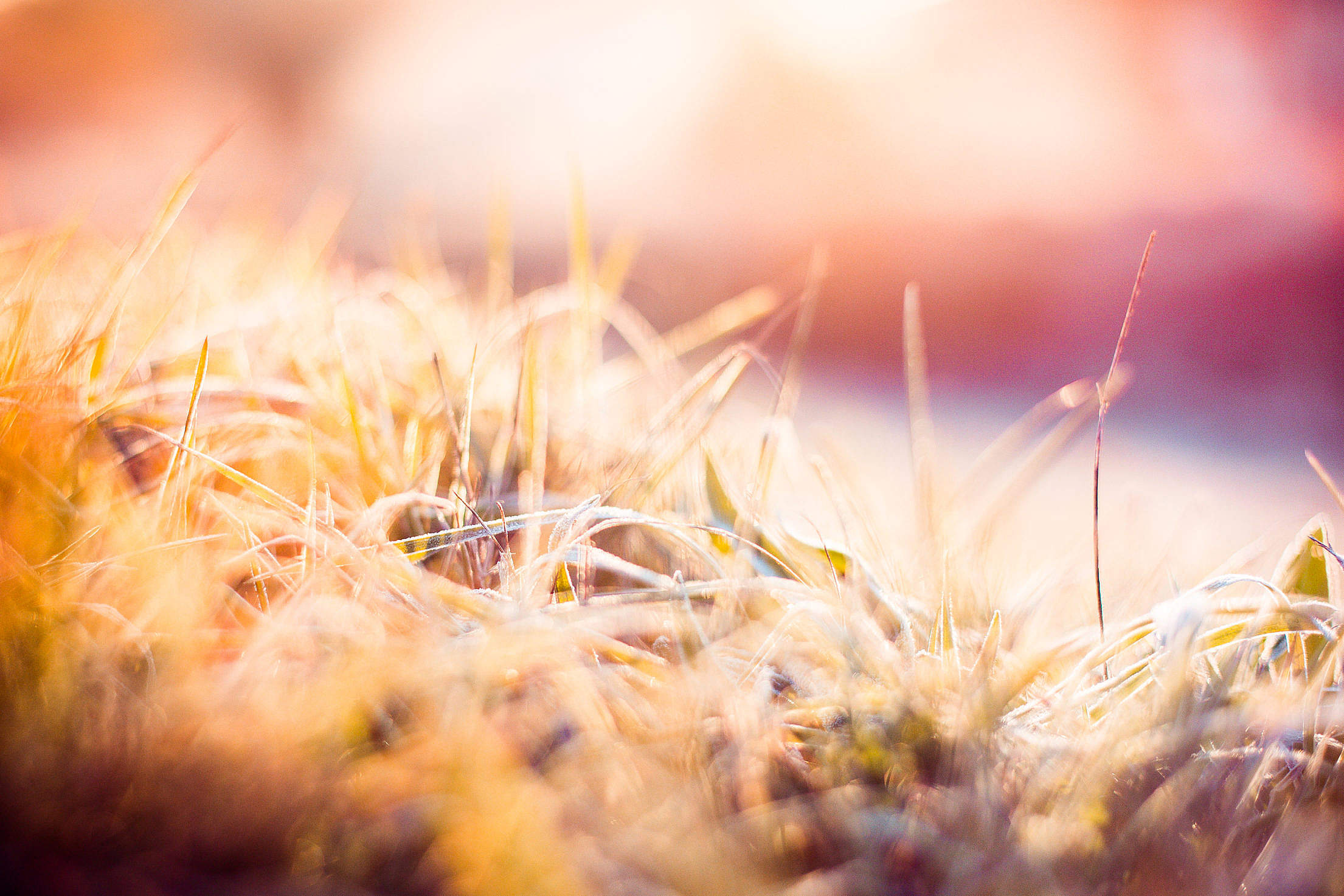 Dreamy Morning Hoarfrost on Grass Free Stock Photo