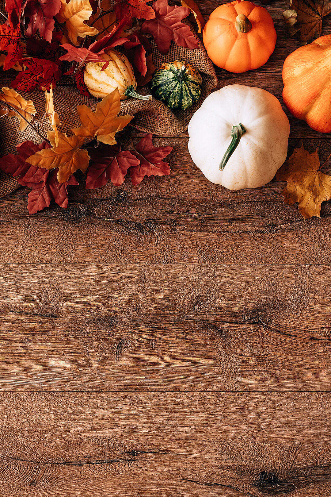 Download Fall and Pumpkins October Still Life with Space for Text FREE Stock Photo