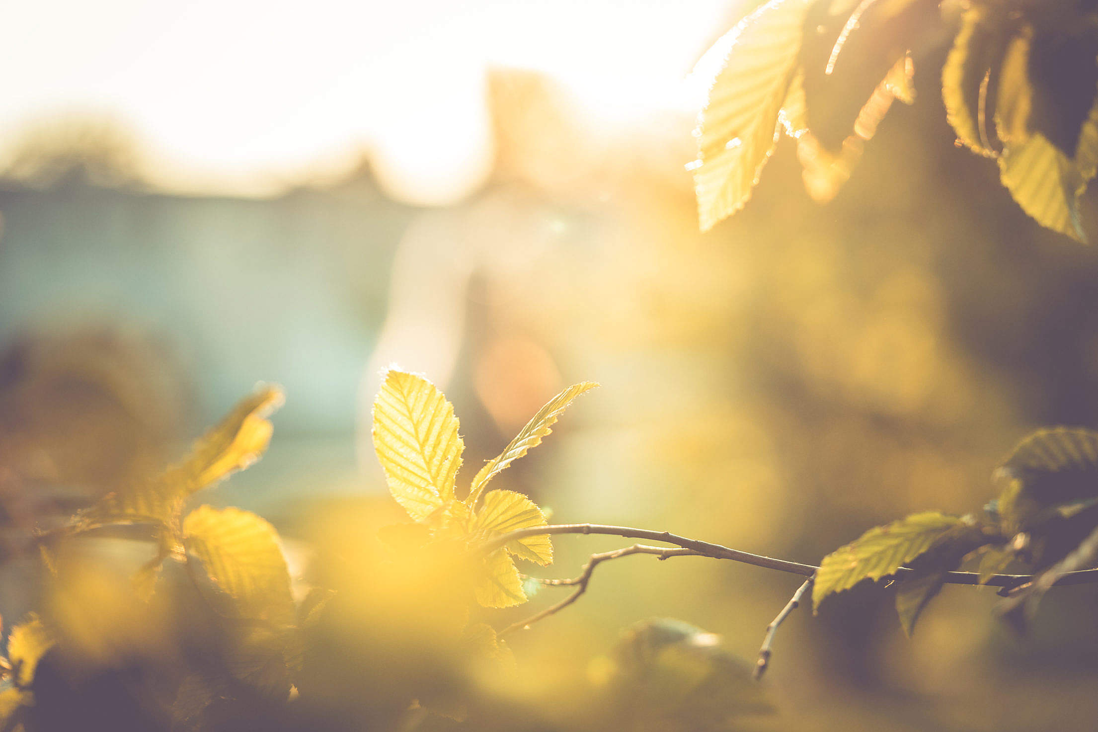 Fall Autumn Leaves Abstract Free Stock Photo