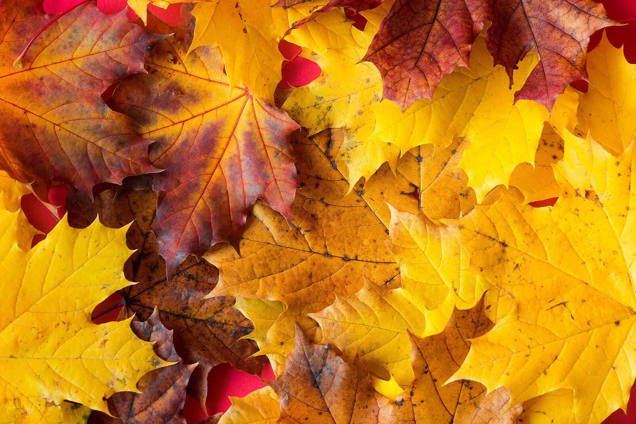 Fall Autumn Leaves Close Up Free Stock Photo