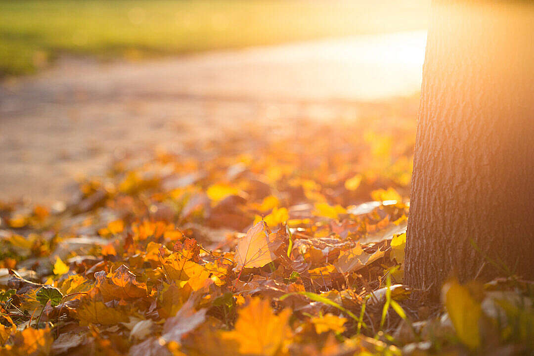 Download Fall Autumn Leaves on the Ground FREE Stock Photo