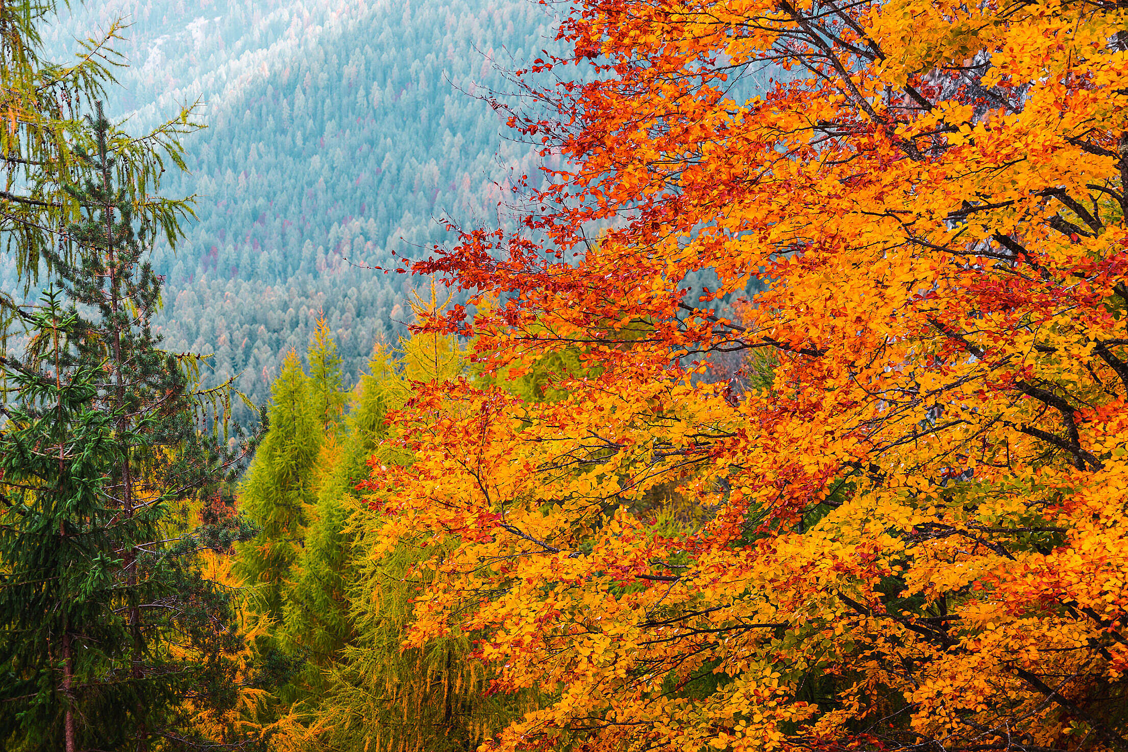 Fall Colors in Nature Free Stock Photo