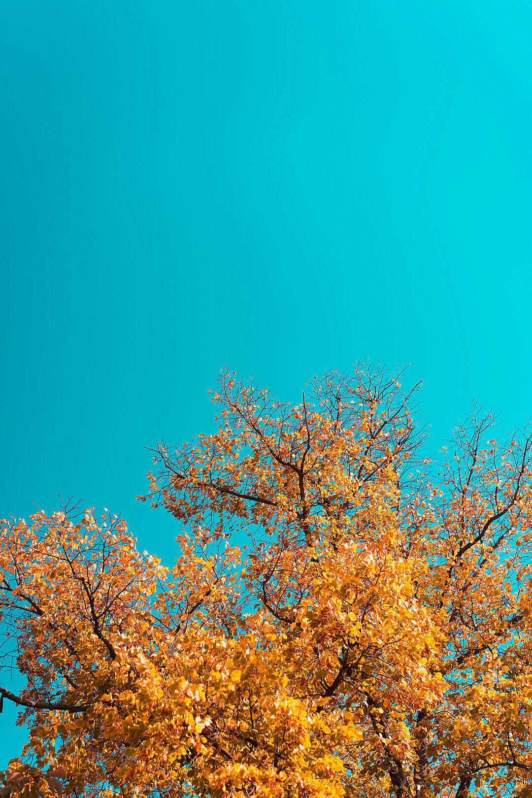 Download Fall Leaves Against Bright Sky FREE Stock Photo