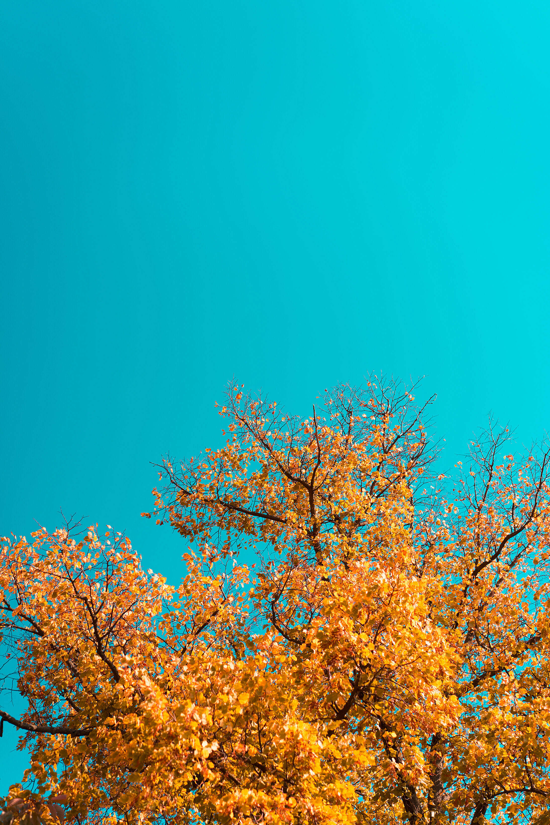 Fall Leaves Against Bright Sky Free Stock Photo