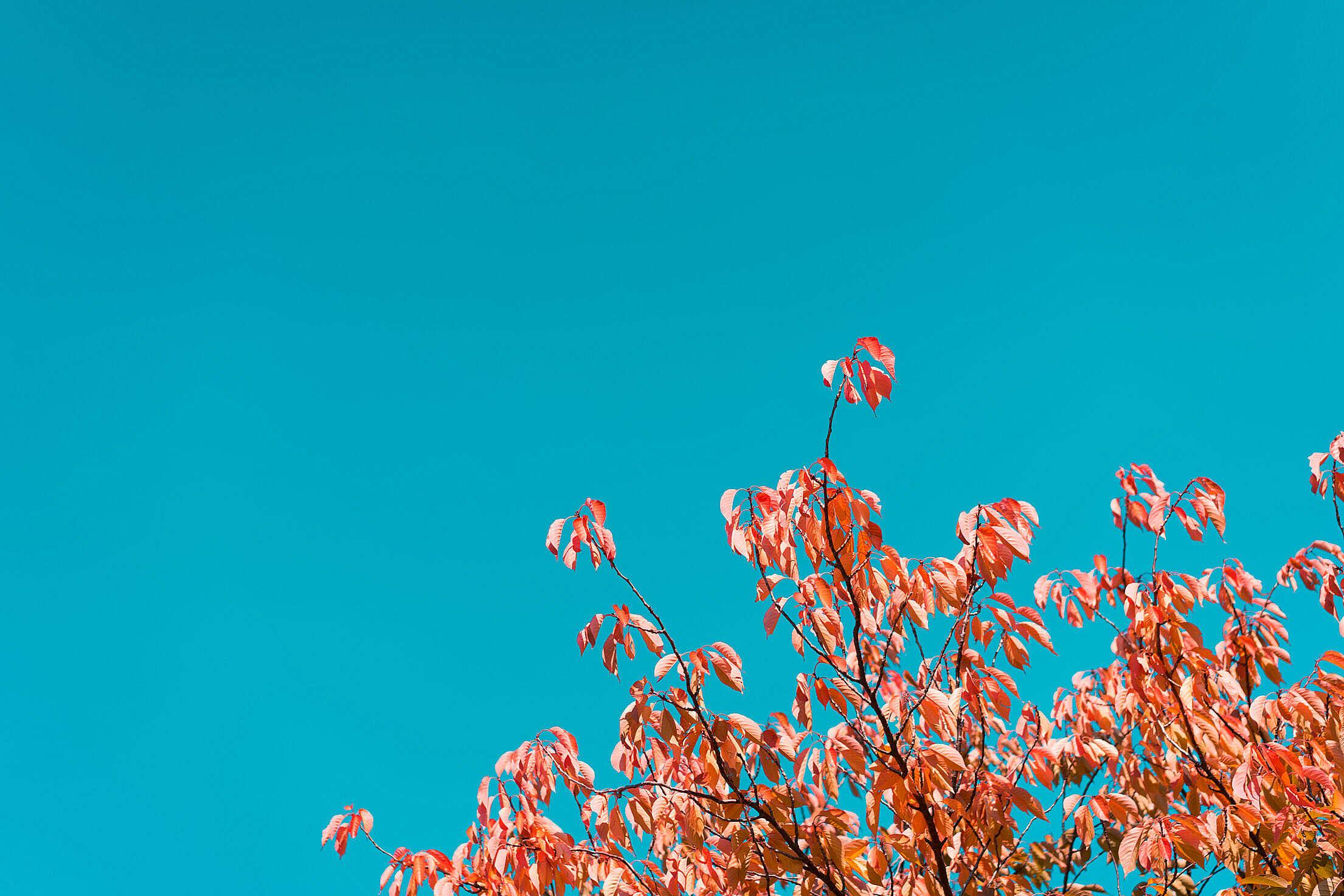 Fall Tree Against Bright Sky Free Stock Photo