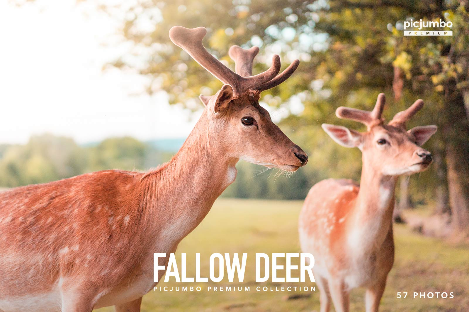 Fallow Deer — get it now in picjumbo PREMIUM!