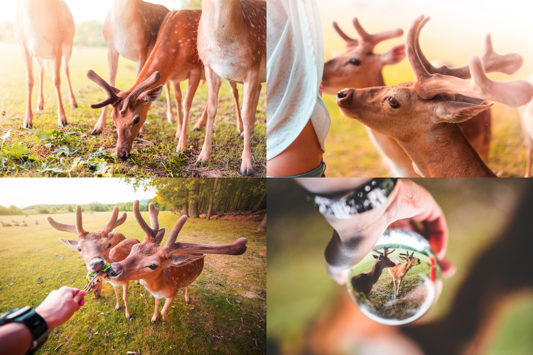 fellow deer preview 1