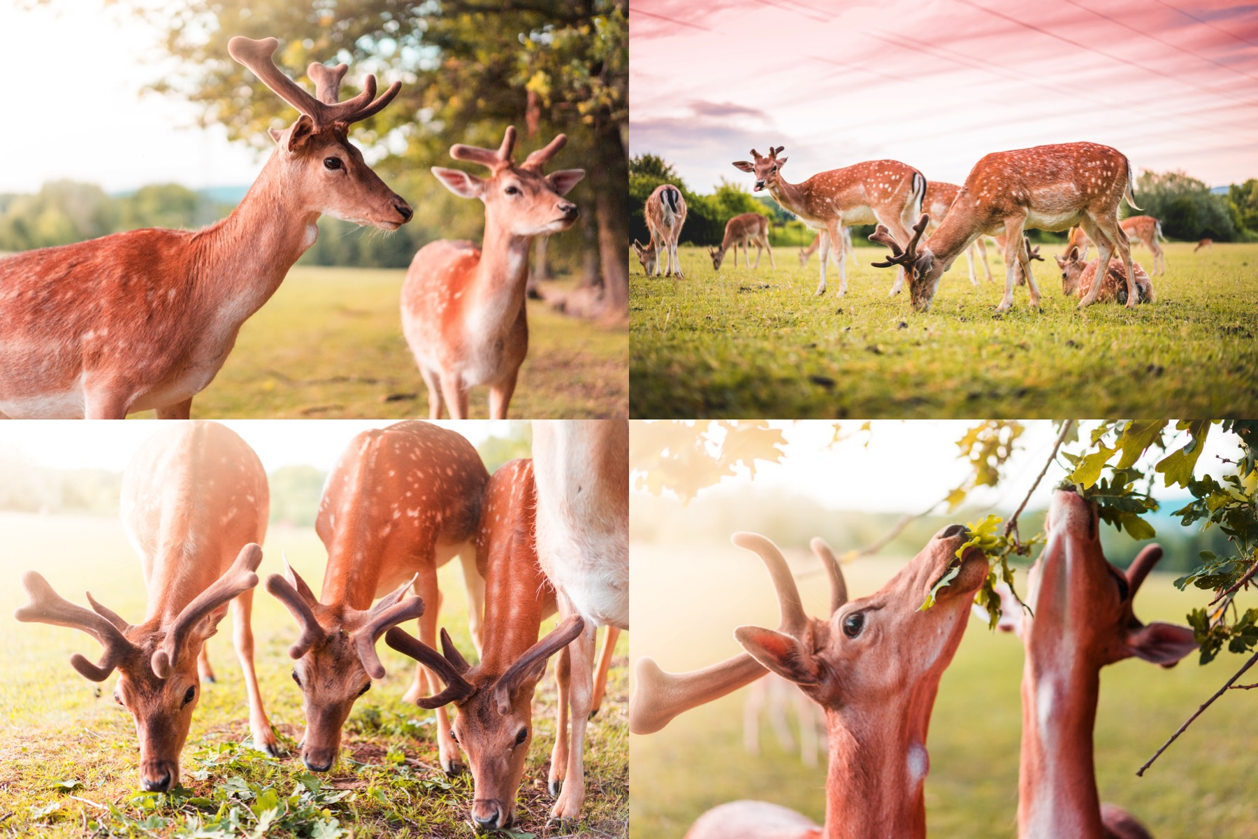fellow deer preview 2