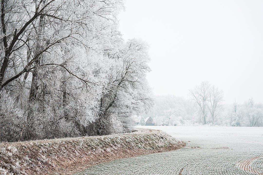 Download Field and Trees Covered in Hoarfrost FREE Stock Photo