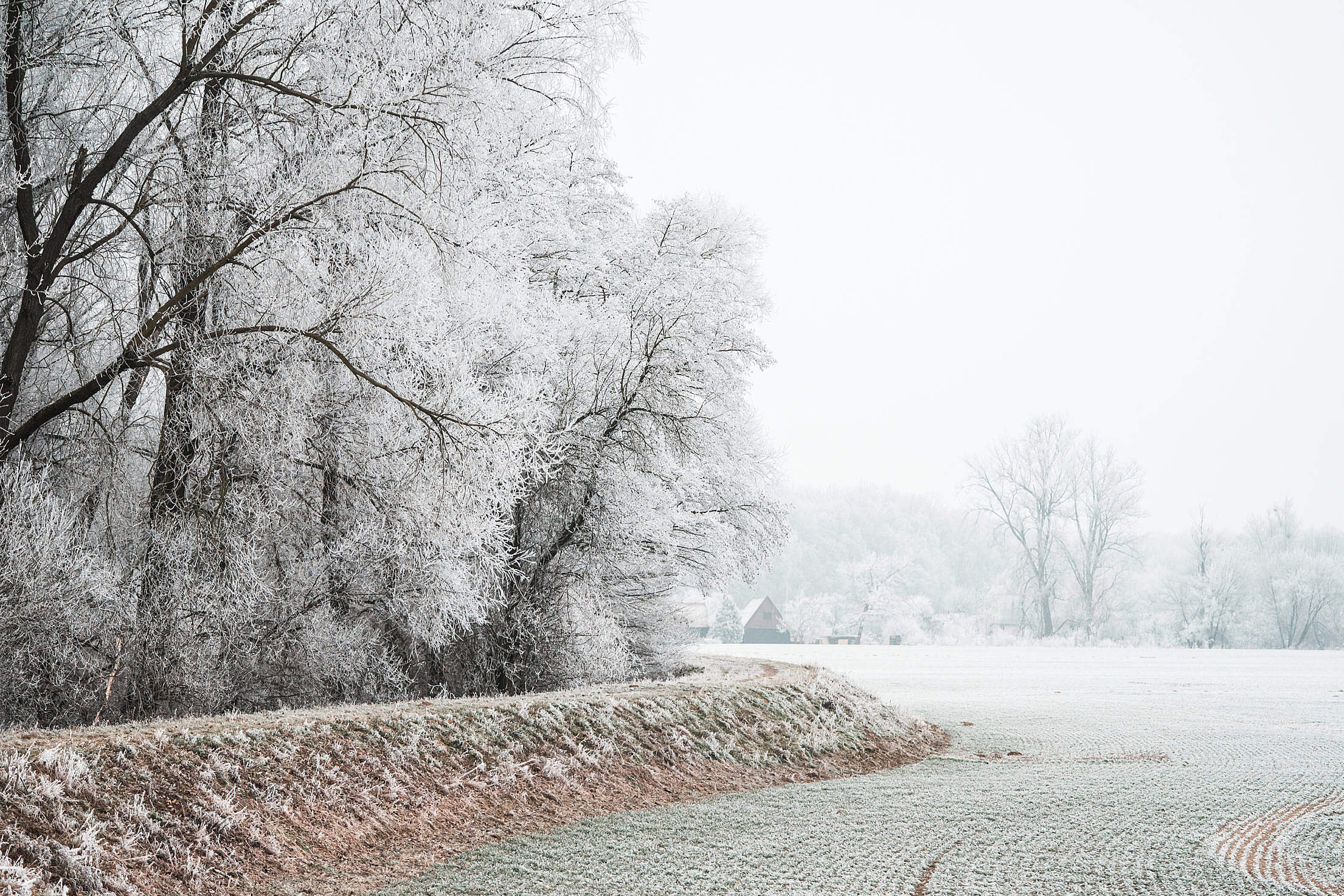 Field and Trees Covered in Hoarfrost Free Stock Photo