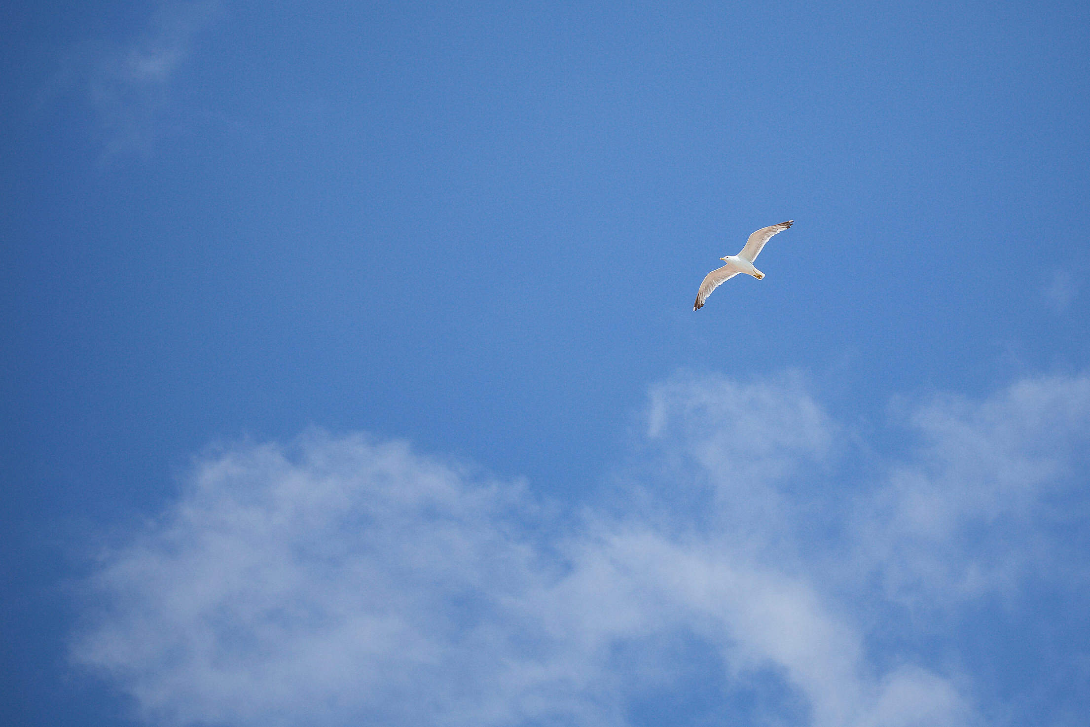 Flying Seagull — Free as a Bird Free Stock Photo