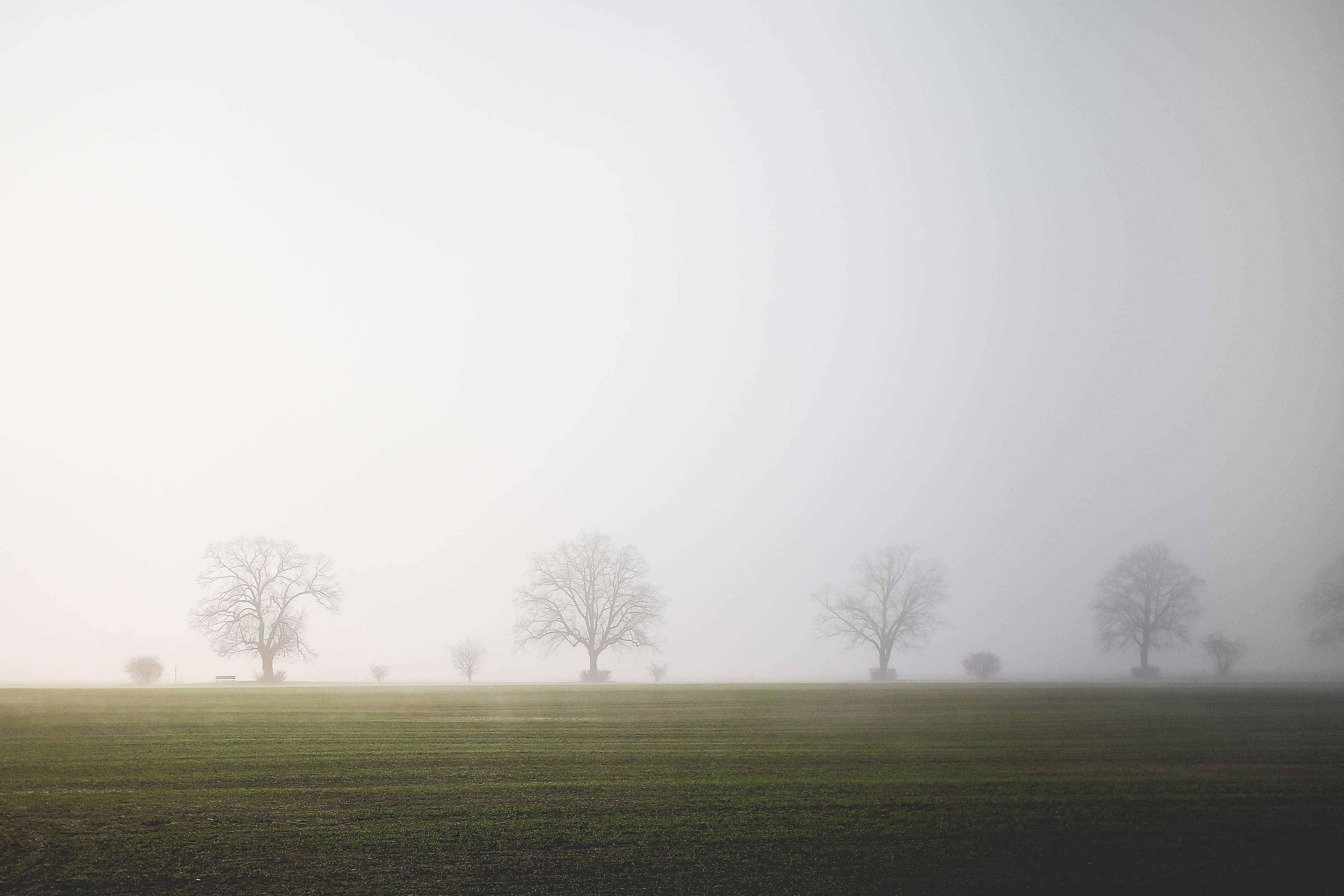 Download Foggy Field FREE Stock Photo