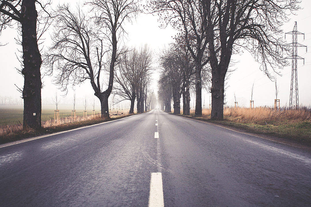 Download Foggy Winter Road FREE Stock Photo