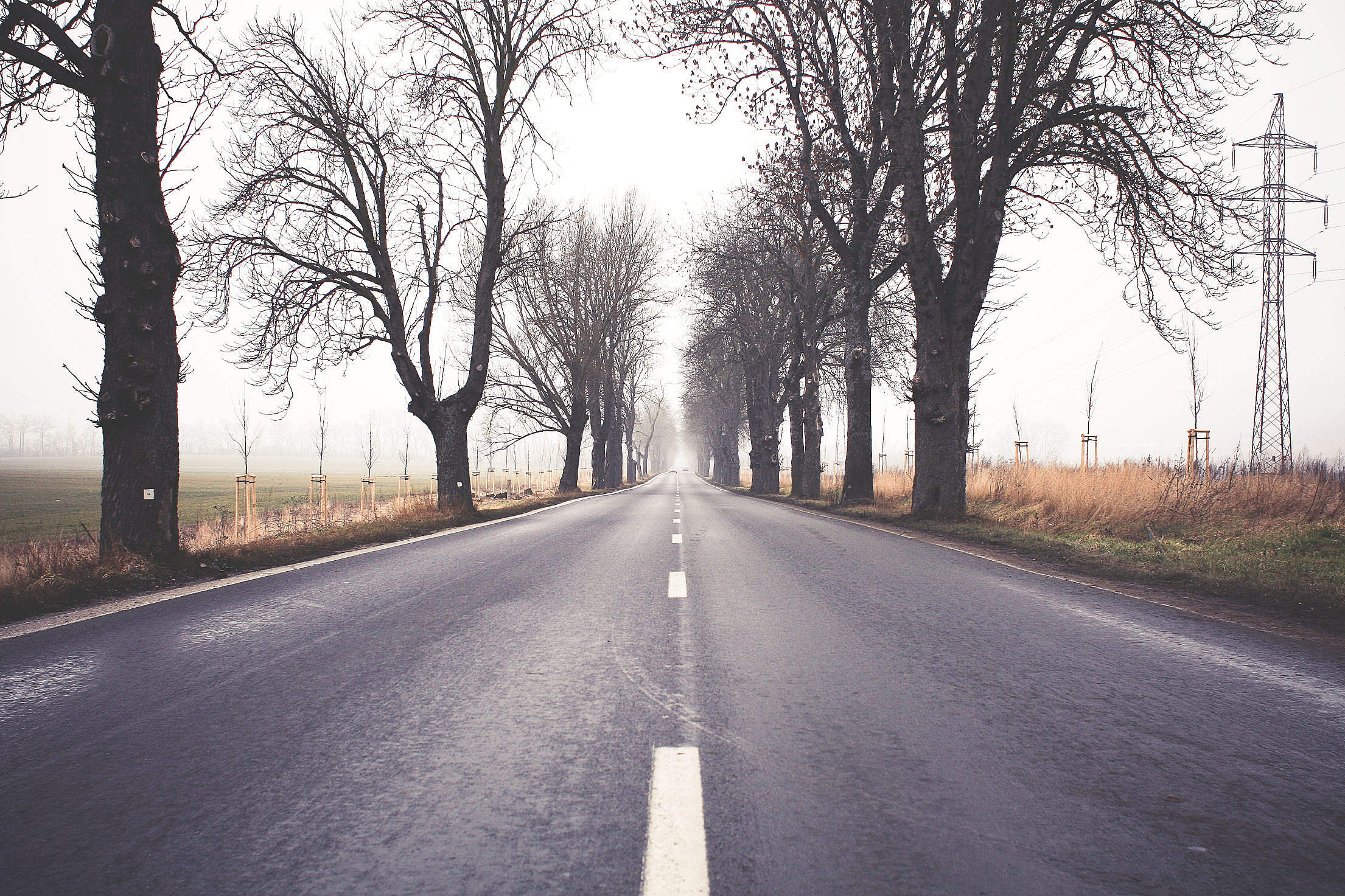 Foggy Winter Road Free Stock Photo