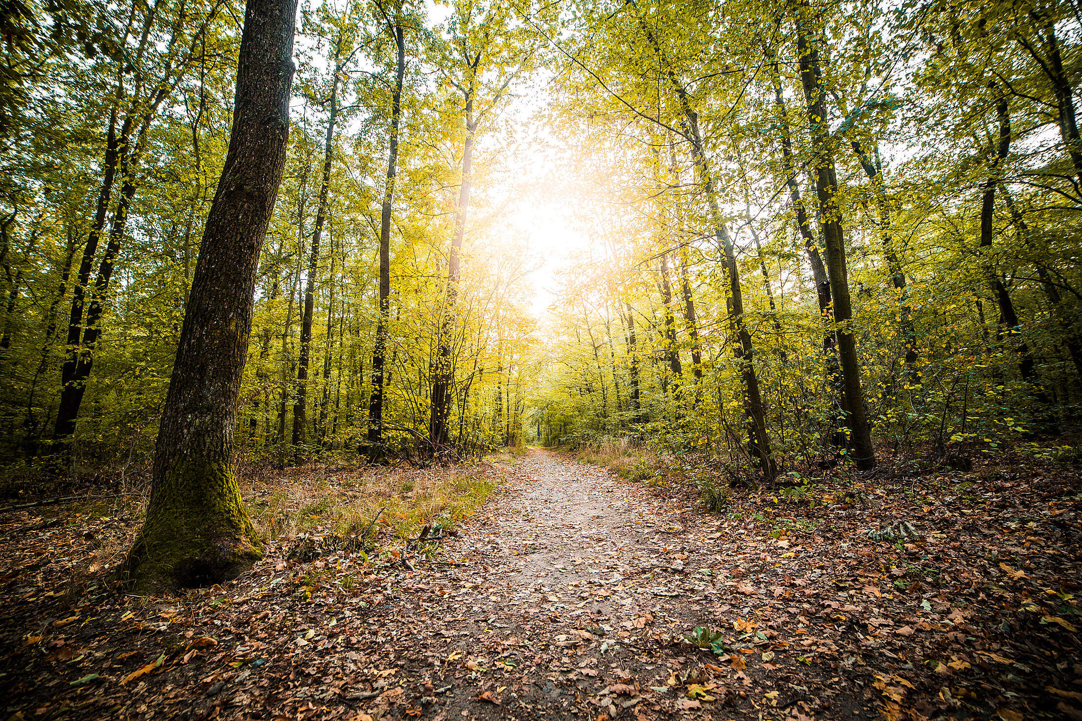 Forest Path in Fall Season Free Stock Photo