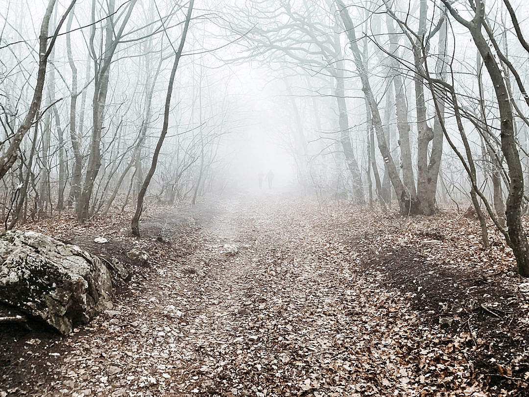 Download Forest Path in The Fog FREE Stock Photo