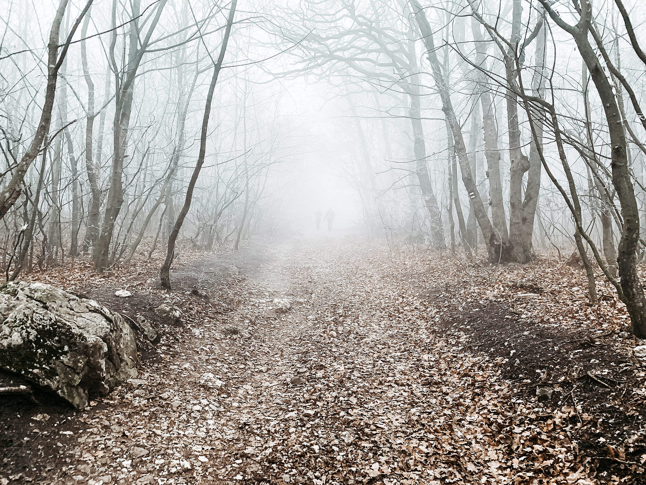 Forest Path in The Fog Free Stock Photo