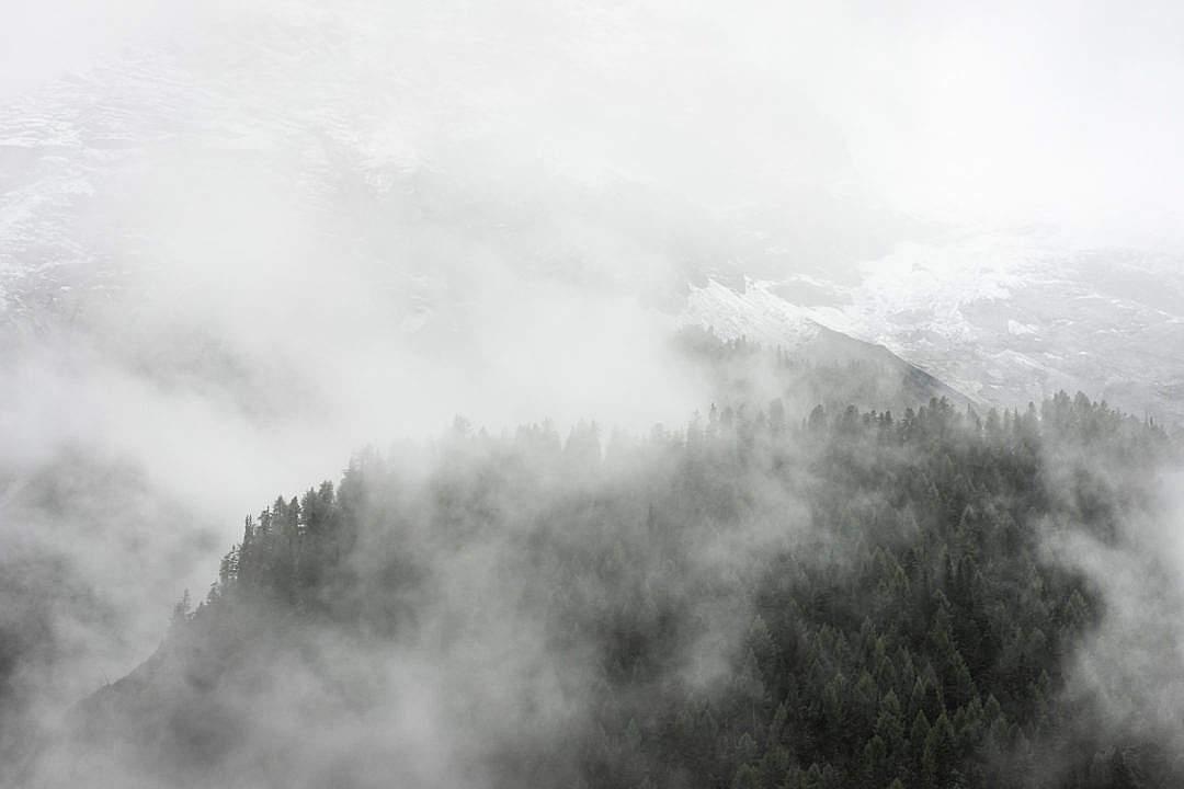 Download Forest under Dark Fog FREE Stock Photo