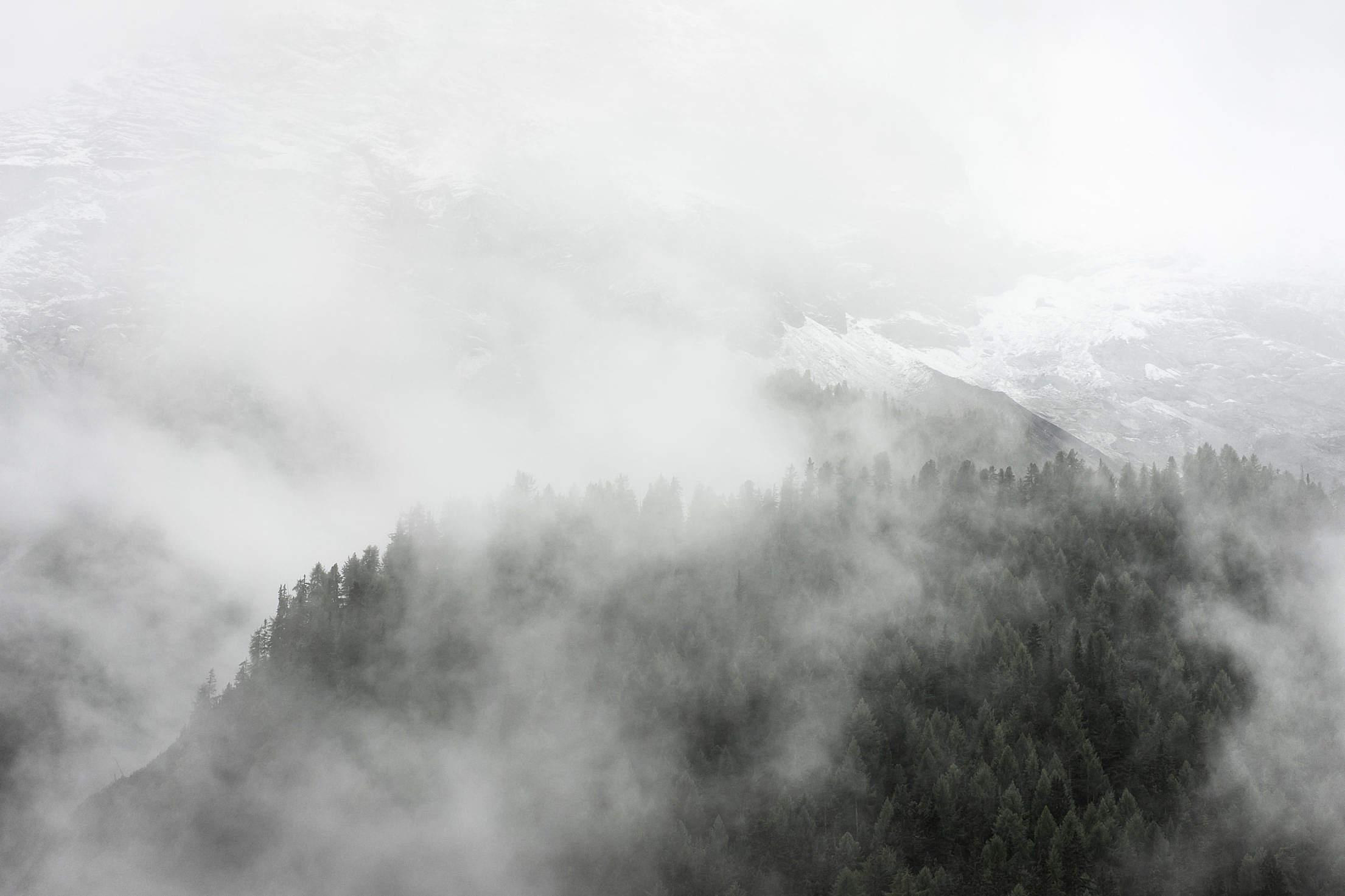 Forest under Dark Fog Free Stock Photo