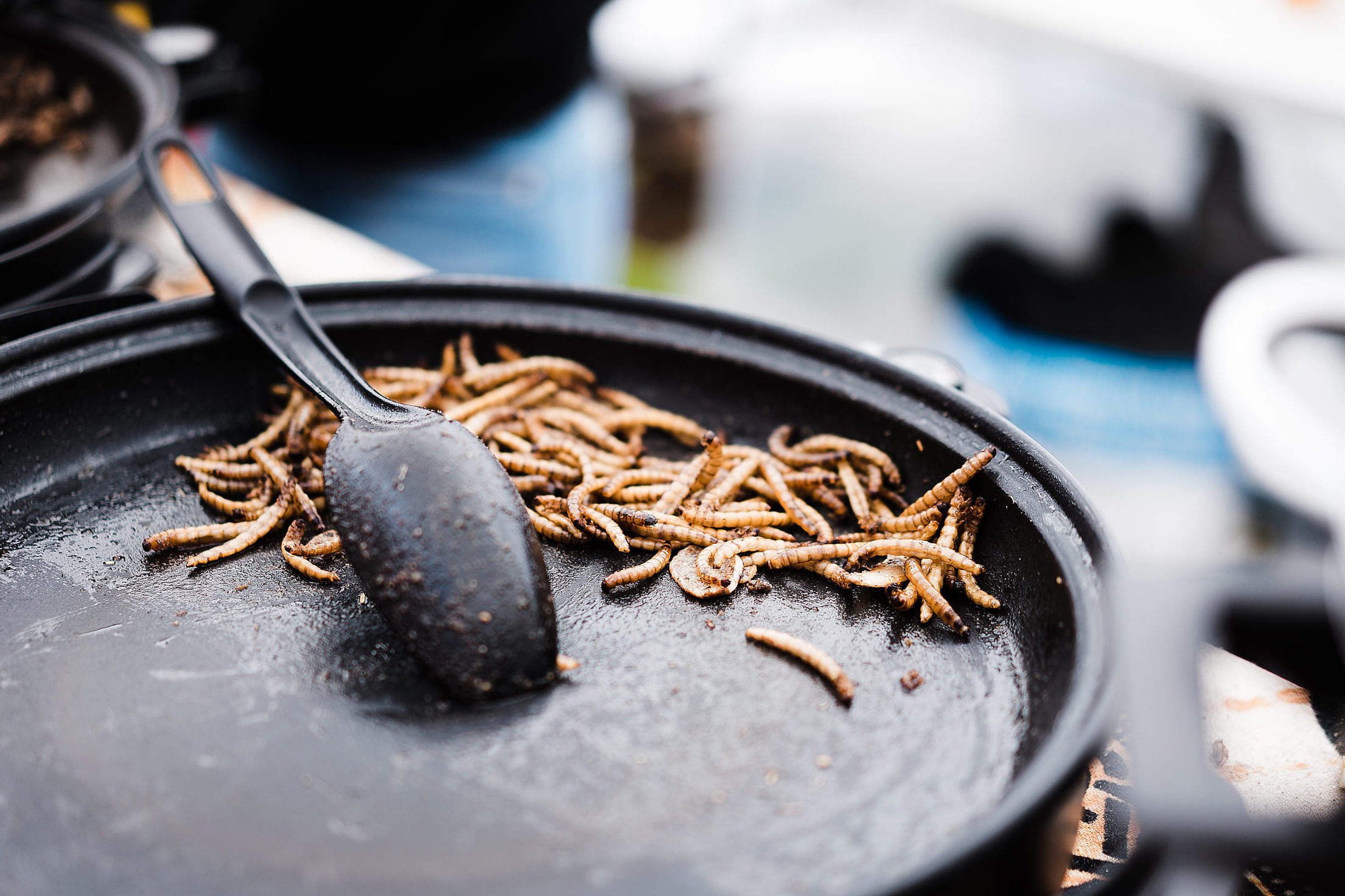 Fried Caterpillars Traditional Exotic Asian Food Free Stock Photo