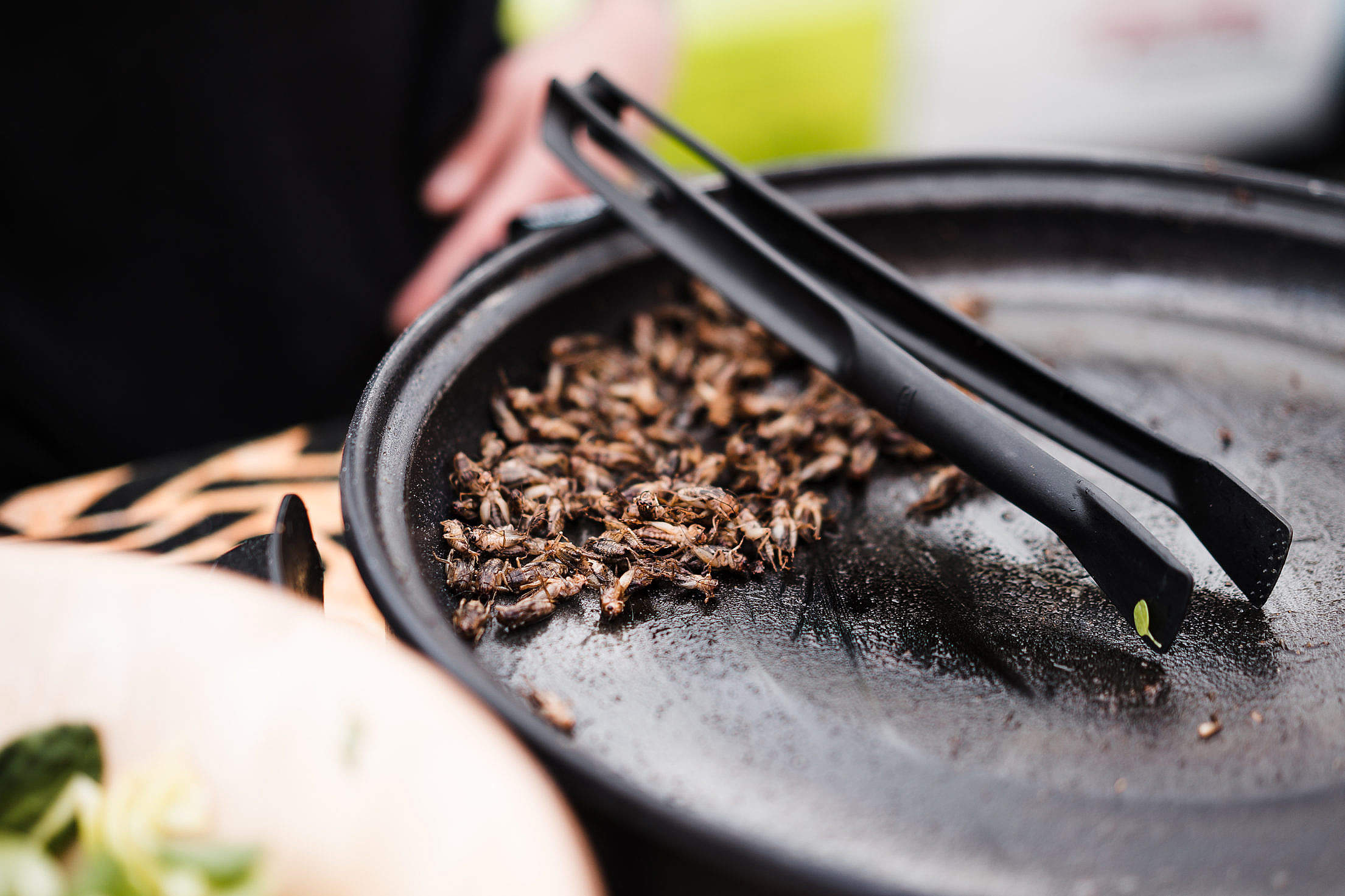 Fried Insects Beetles Traditional Exotic Asian Food Free Stock Photo