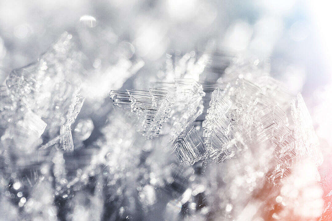 Download Frozen Snowflakes Winter Hoarfrost Crystals Close Up FREE Stock Photo