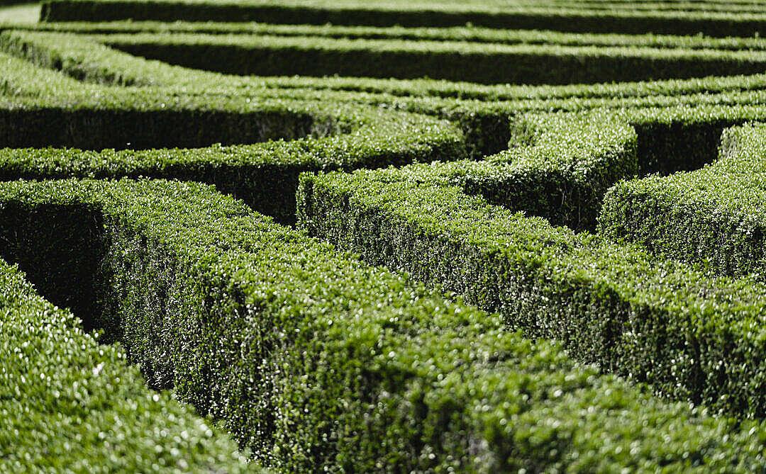 Download Garden Maze FREE Stock Photo