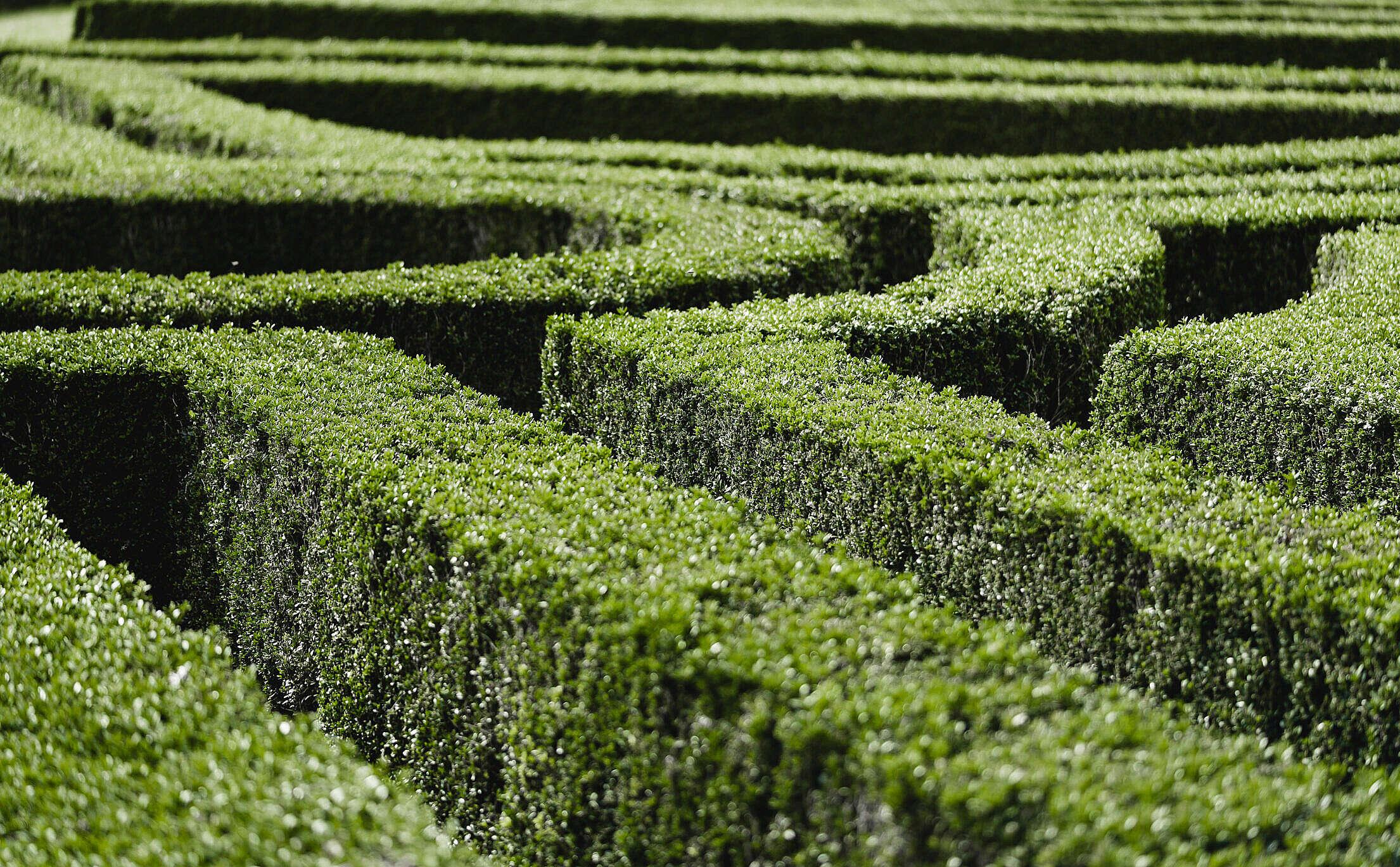 Garden Maze Free Stock Photo