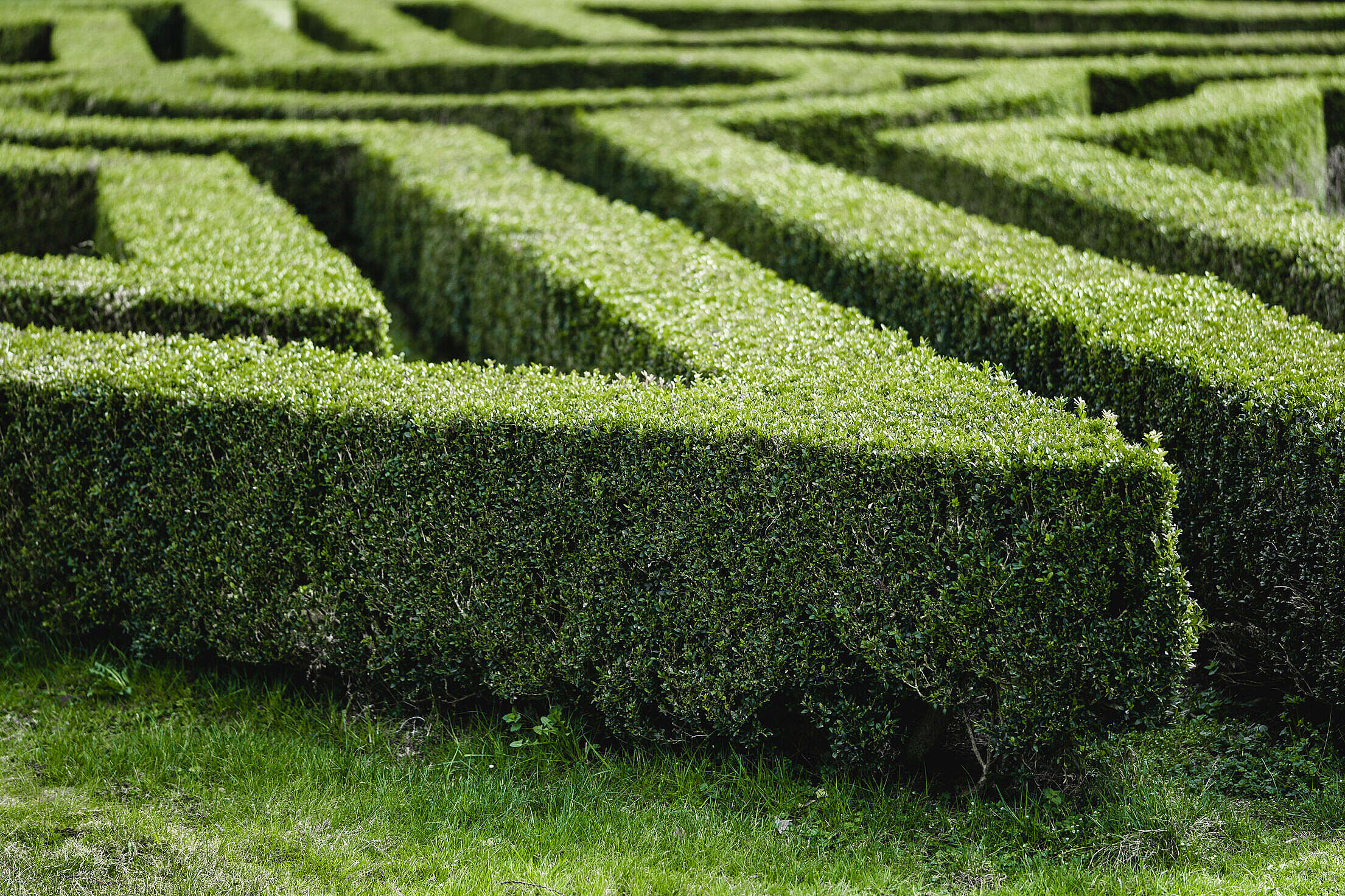 Garden Maze in The Lednice Castle Park Free Stock Photo