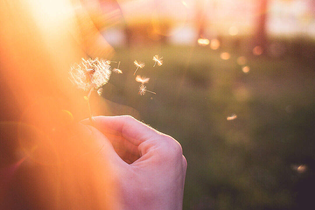 Download Girl Blowing a Blowball/Dandelion FREE Stock Photo