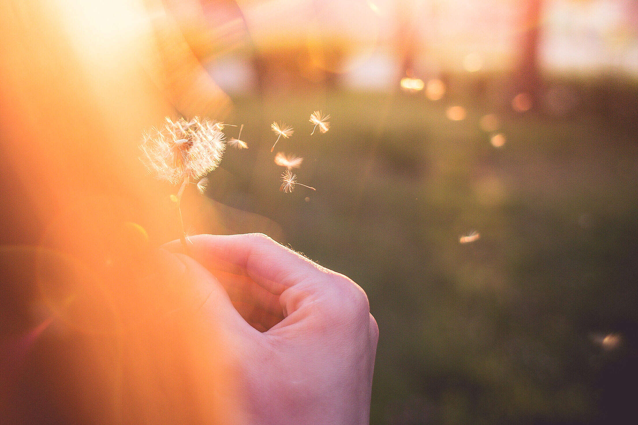 Girl Blowing a Blowball/Dandelion Free Stock Photo