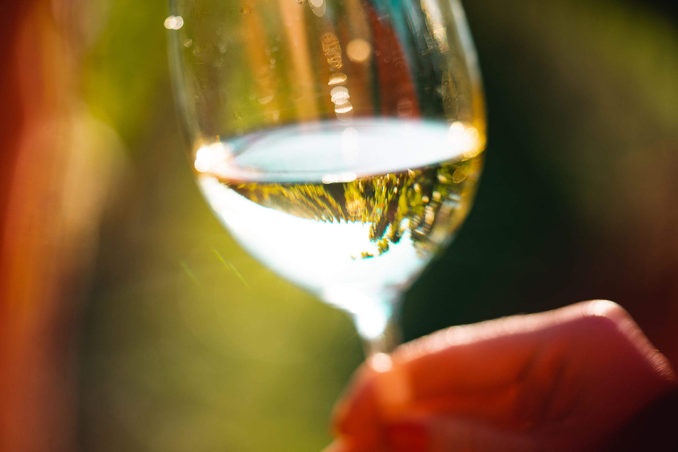Glass of White Wine Free Stock Photo