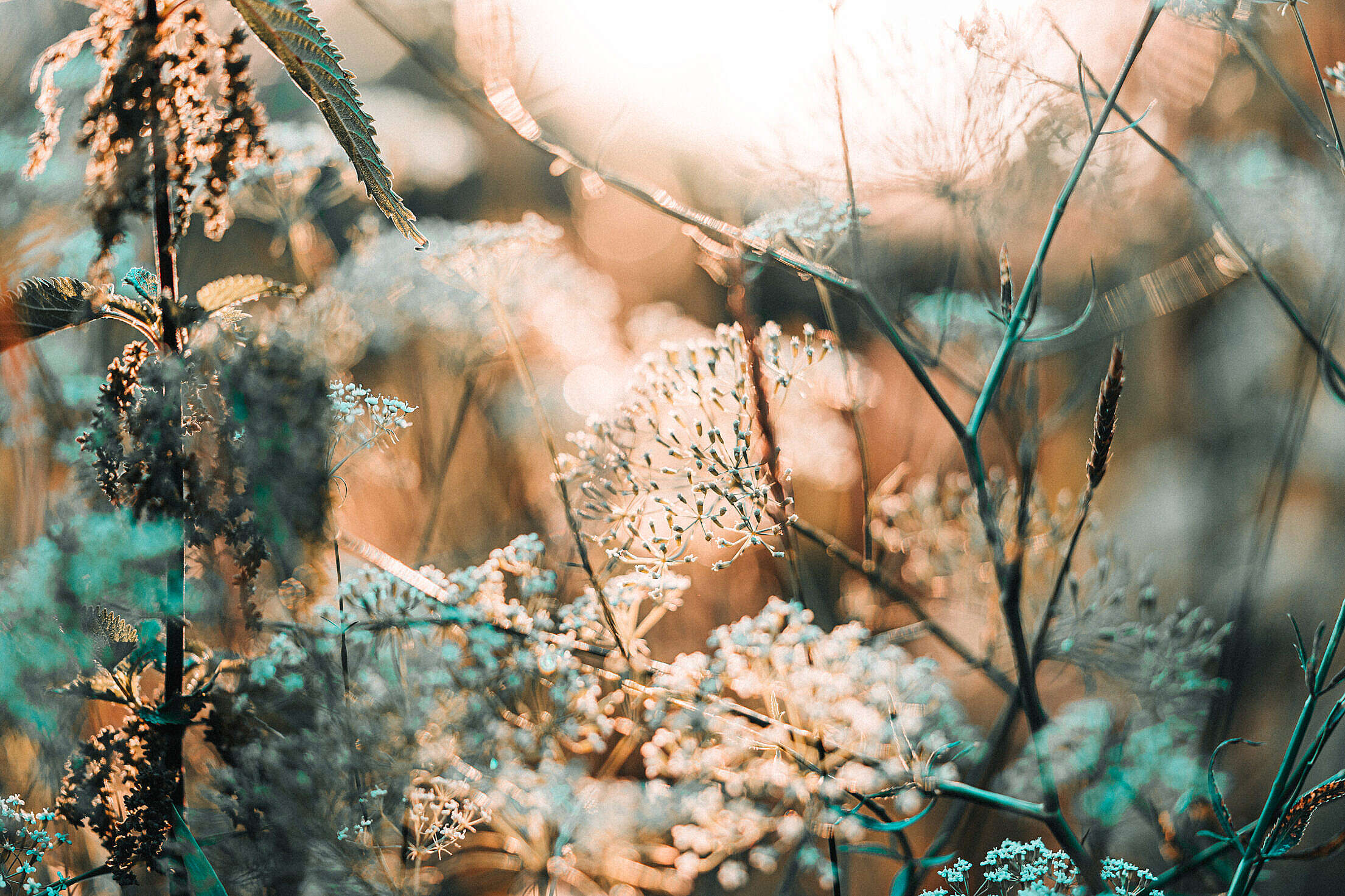 Grass Against Cold Morning Sun Free Stock Photo
