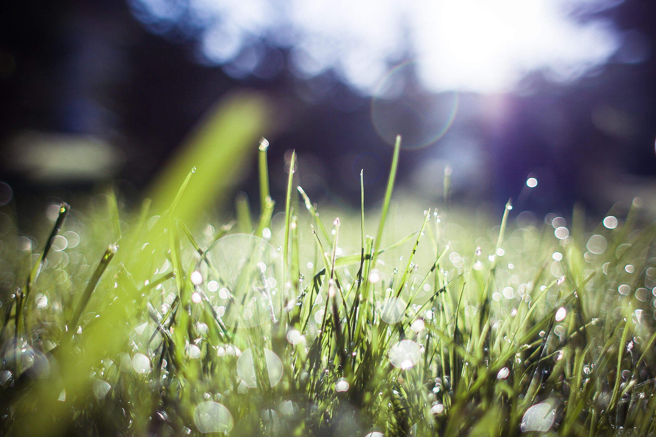Grass Blue Feelings Free Stock Photo