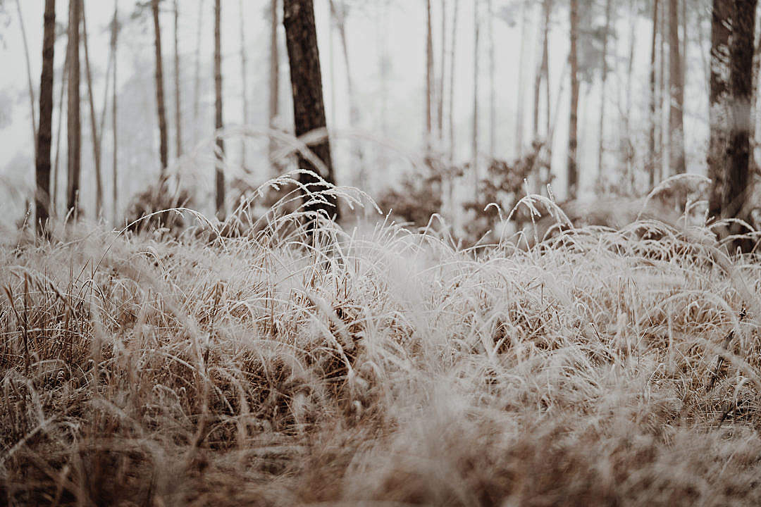 Download Grass Covered with a Hoarfrost in a Wild Forest FREE Stock Photo