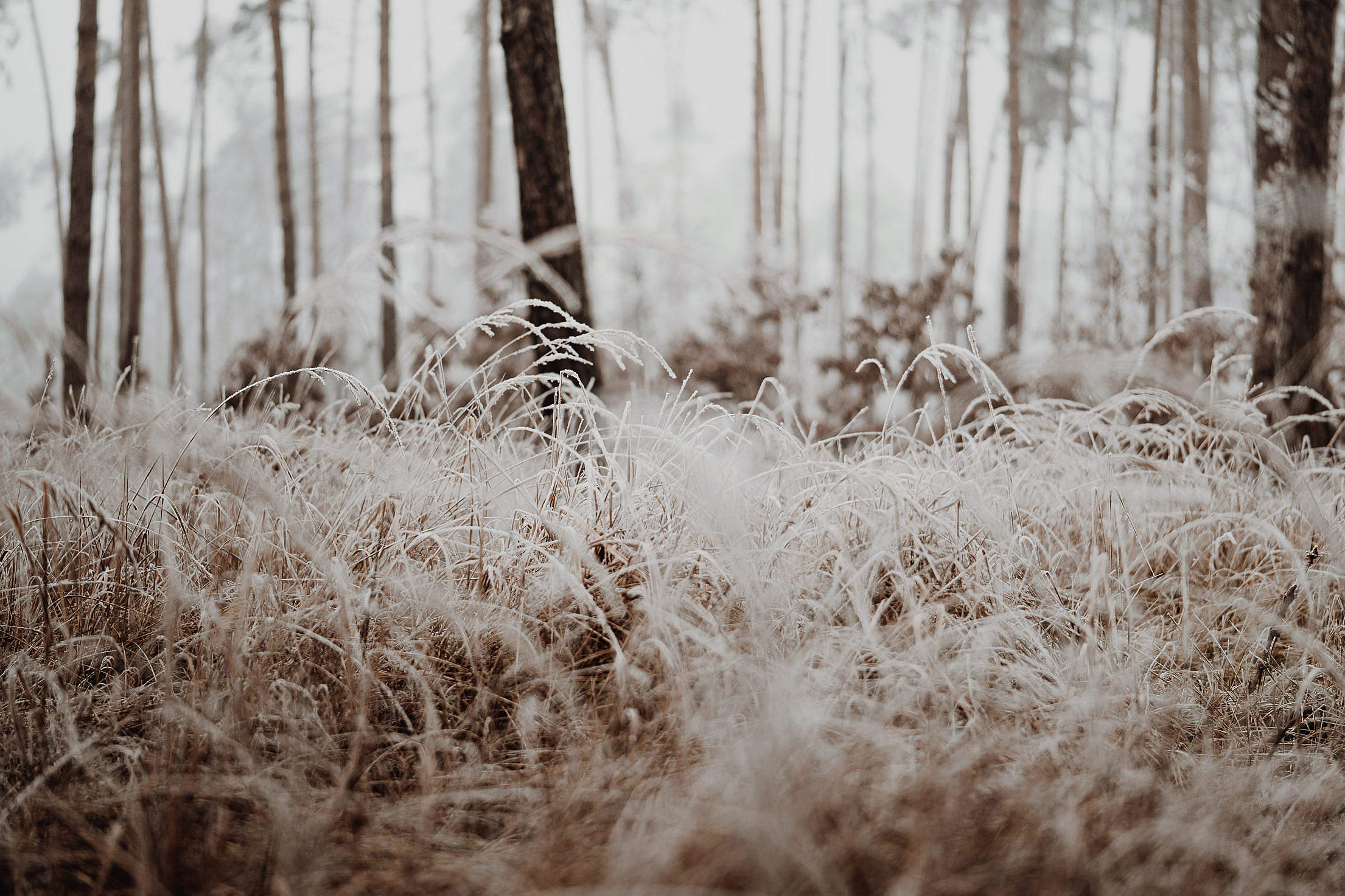 Grass Covered with a Hoarfrost in a Wild Forest Free Stock Photo