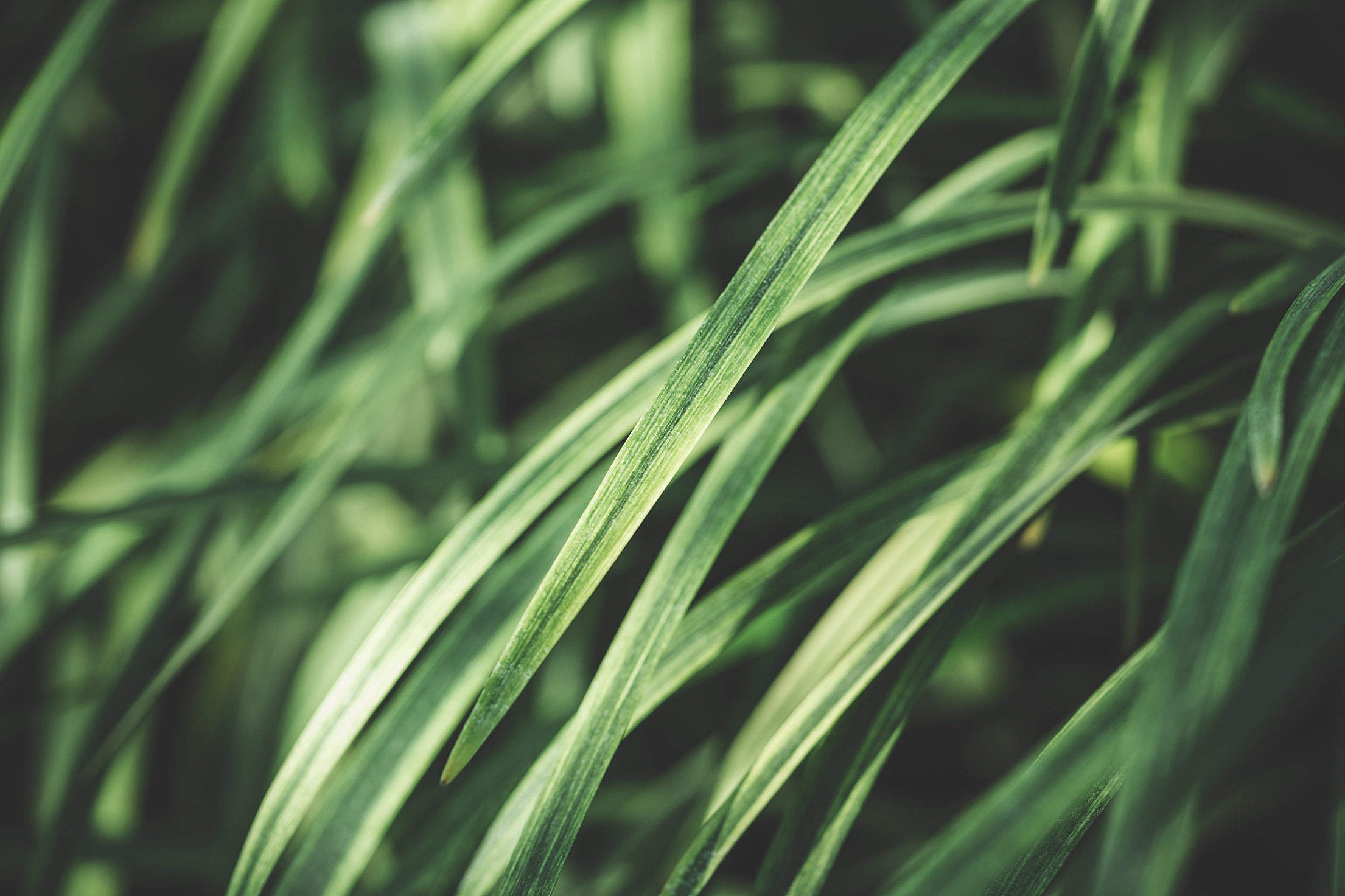 Grass Stems Close Up Free Stock Photo